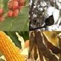 É POSSÍVEL HARMONIZAR A AGRICULTURA FAMILIAR COM O AGRONEGÓCIO BRASILEIRO.
