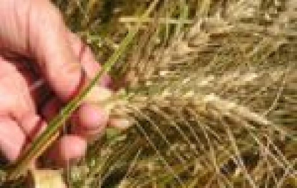 Resumo da oferta, estoques, importações e exportações de trigo brasileiras.